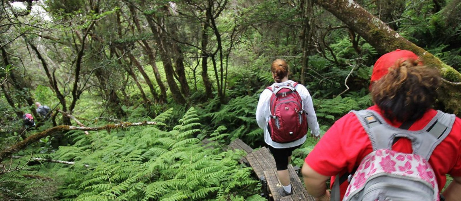 hiking among ferns