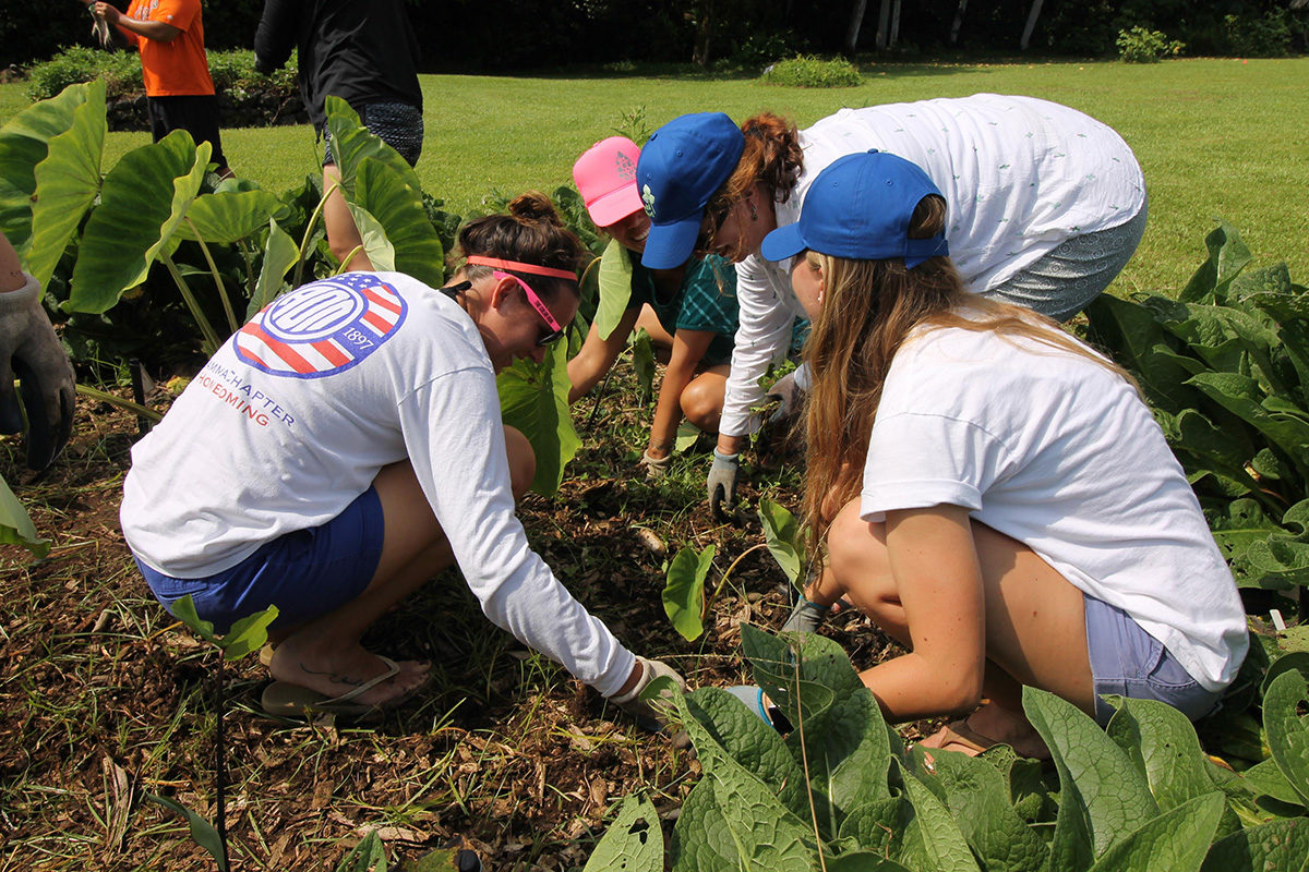 students working in taro patch