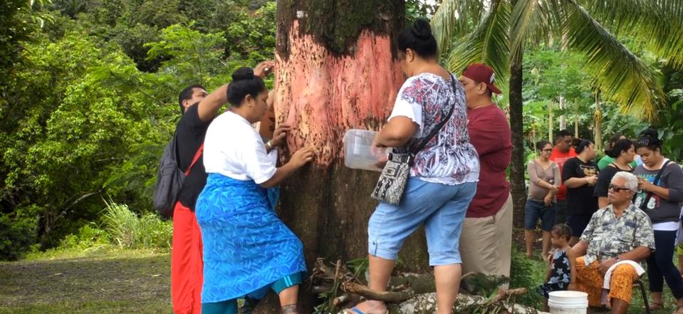 Zuercher.Samoa_